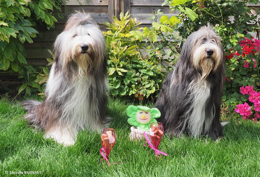 laverie libre speed queen reims service chiens bienvenus machines pour linge animalier